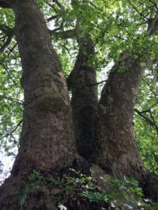 arbre des liens